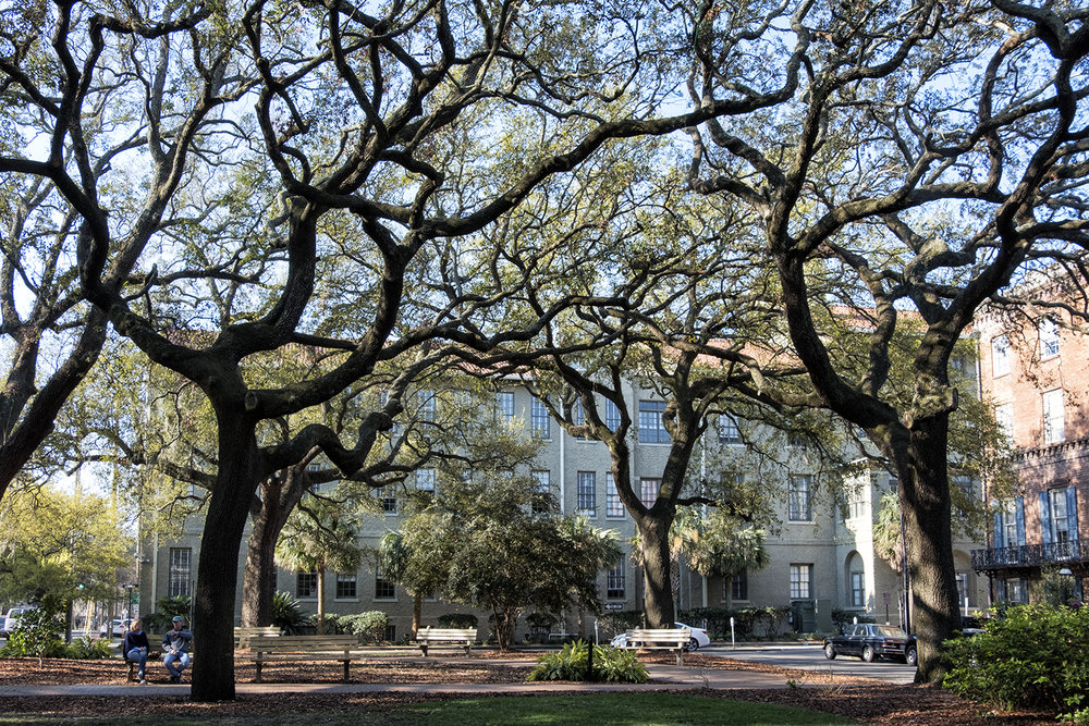 170318 Savannah 02-1.jpg
