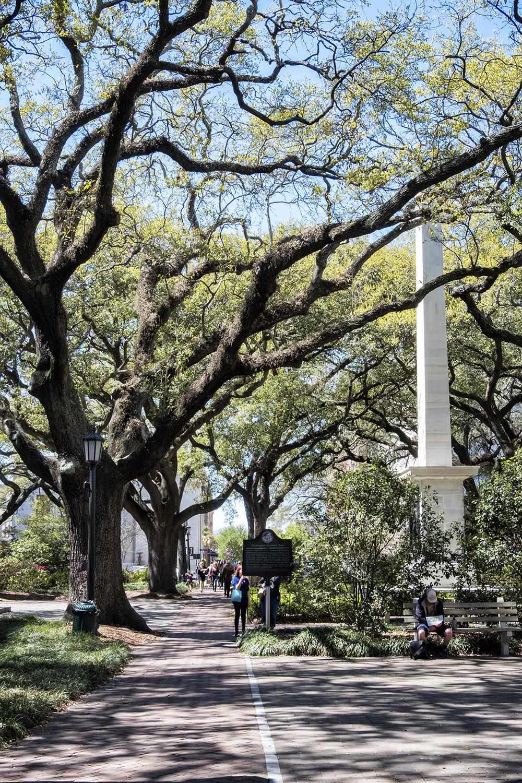 170319 Savannah 044-1.jpg