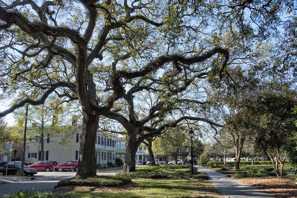 170317 Savannah 03-1.jpg