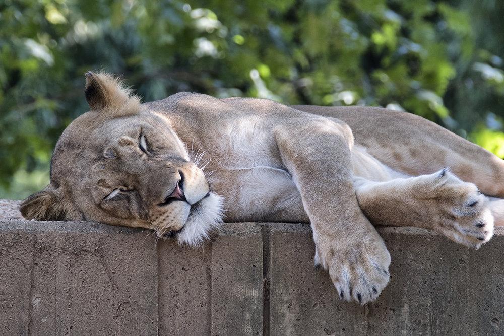 170708 Zoo 36-1.jpg