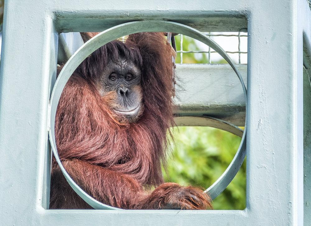 170708 Zoo 06-1 flat.jpg