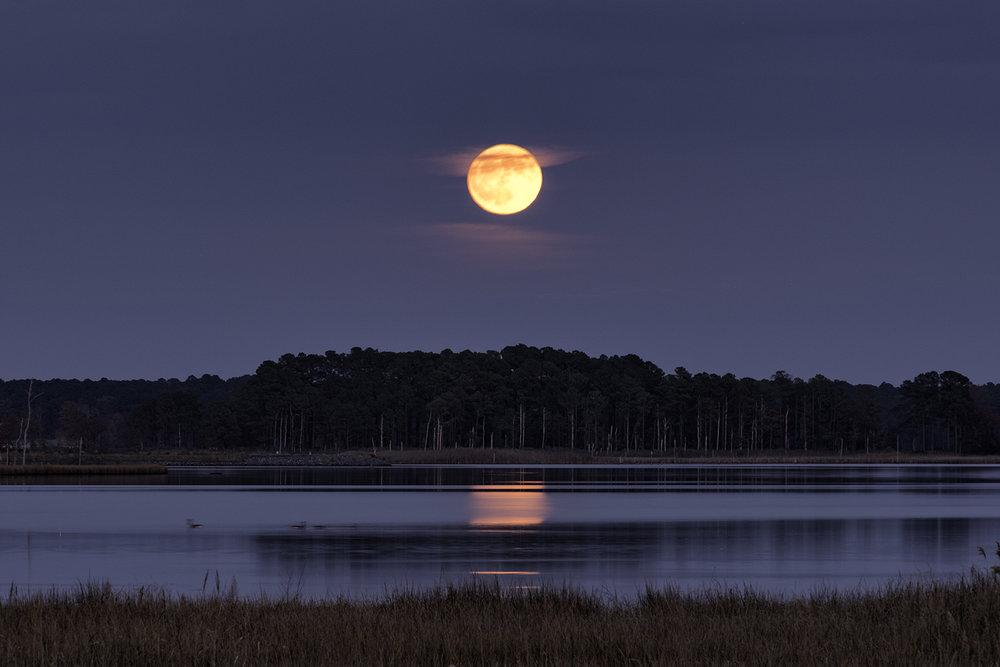 Blackwater NWR, November Moonrise