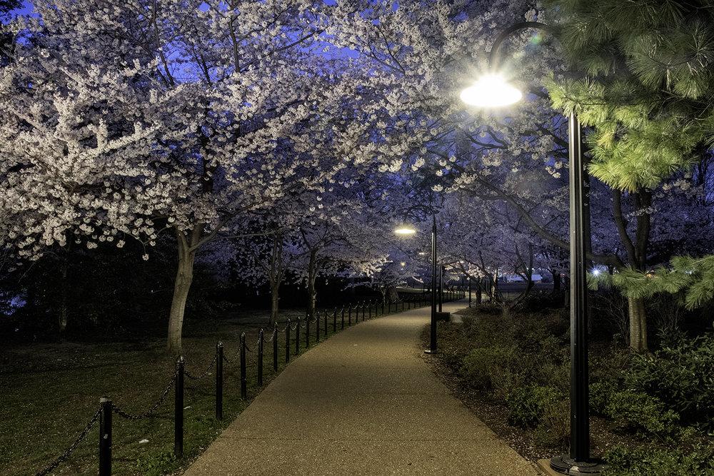 West Potomac Park, April Morning