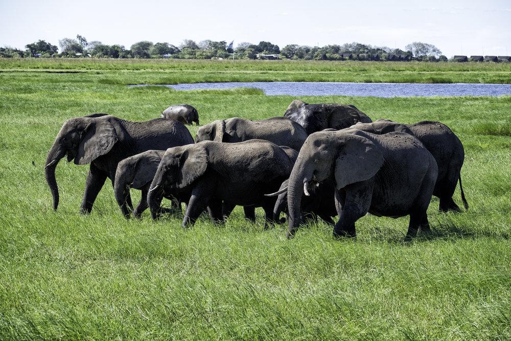 Chobe Park, Botswana, February Afternoon