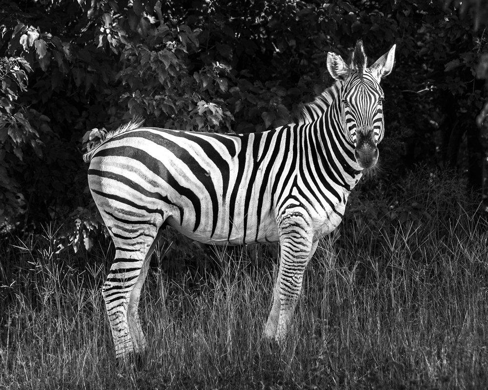 Chobe Park, Botswana