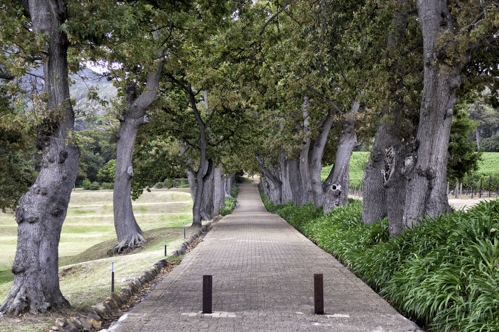 Groot Constantia Winery, Cape Town, SA
