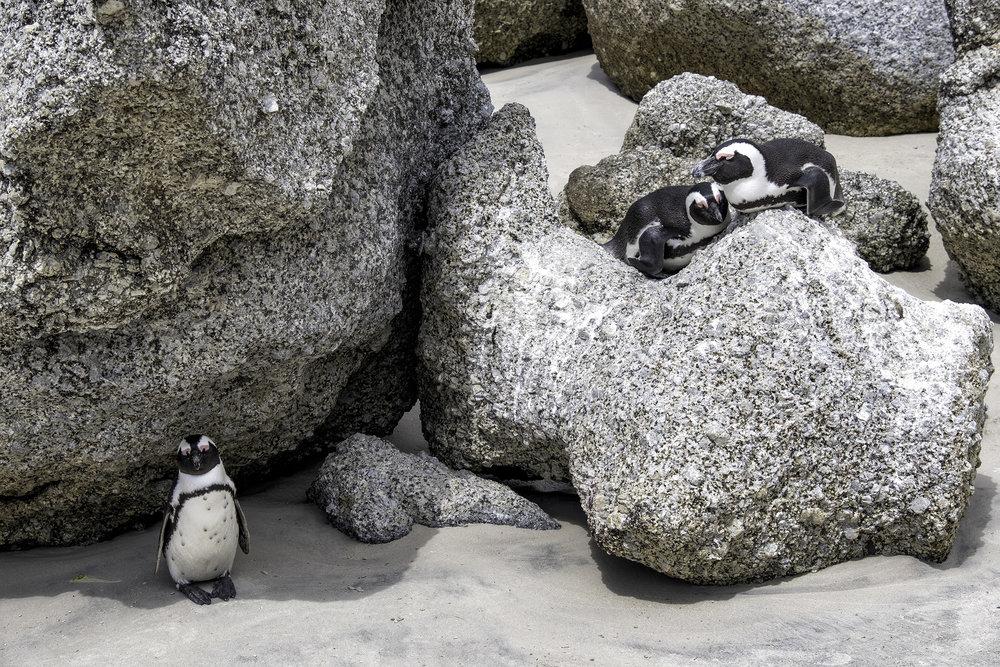 Boulder Beach, Cape Town