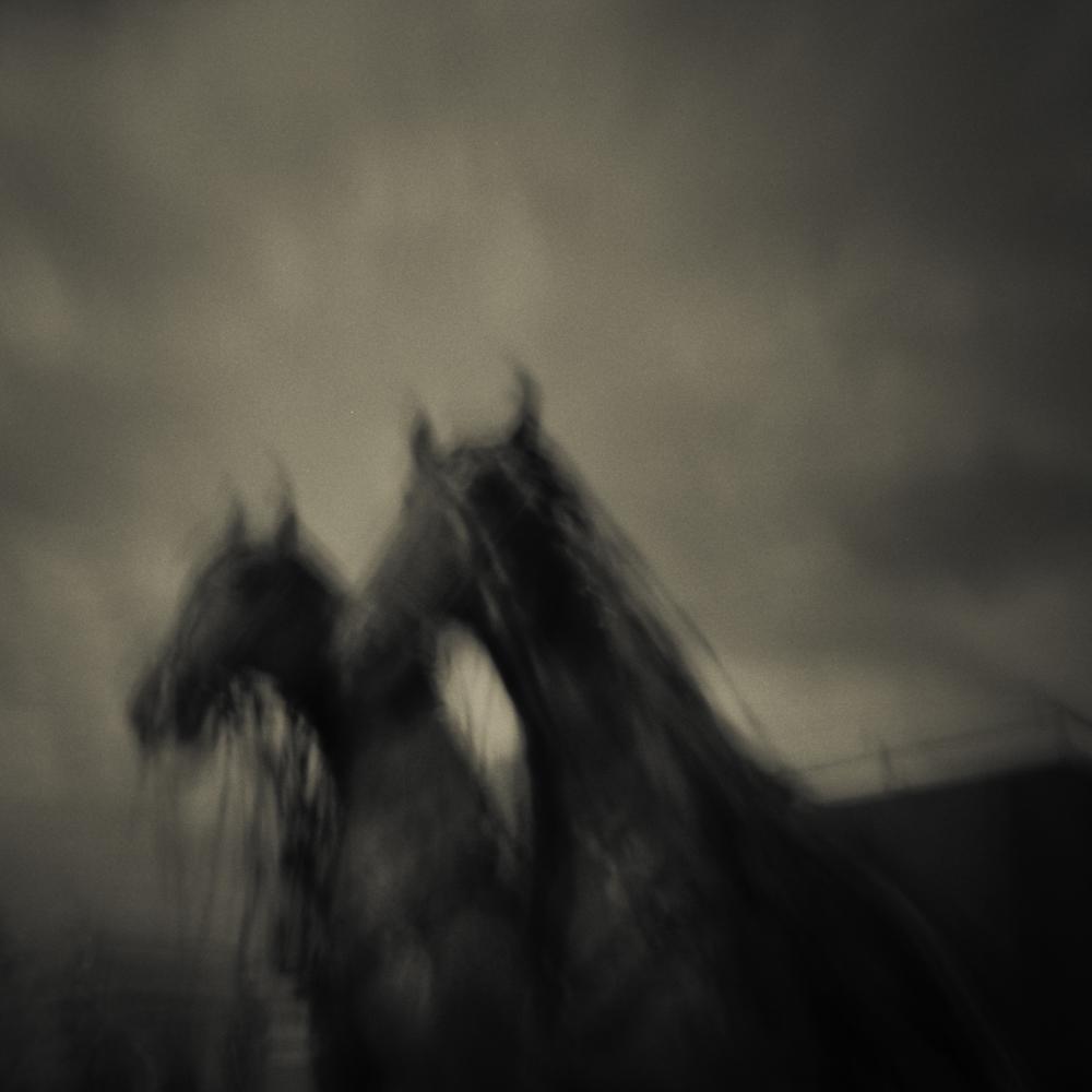 Two Horses, Modern Pinhole Photography