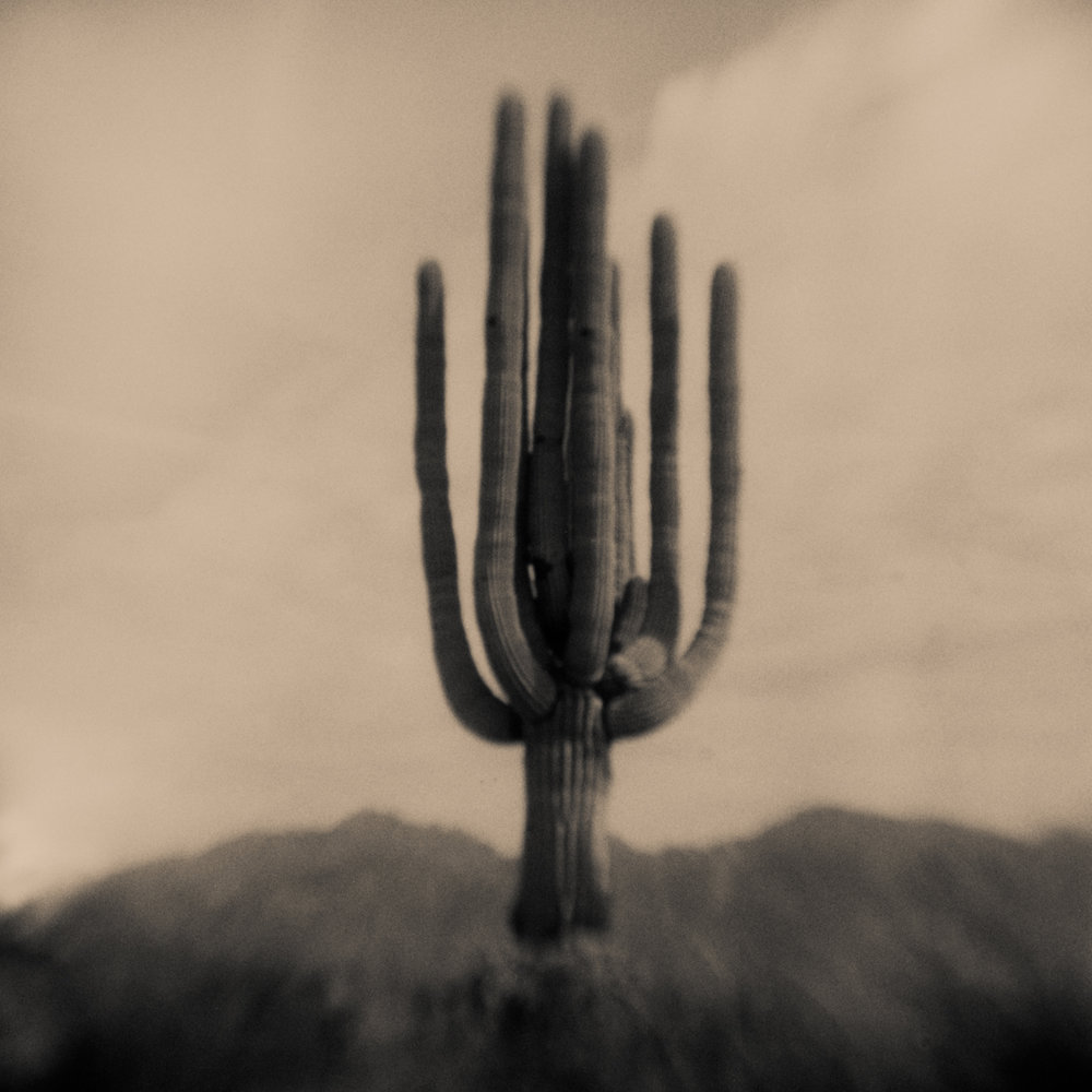 Cactus, Pinhole Photography, David McCleery