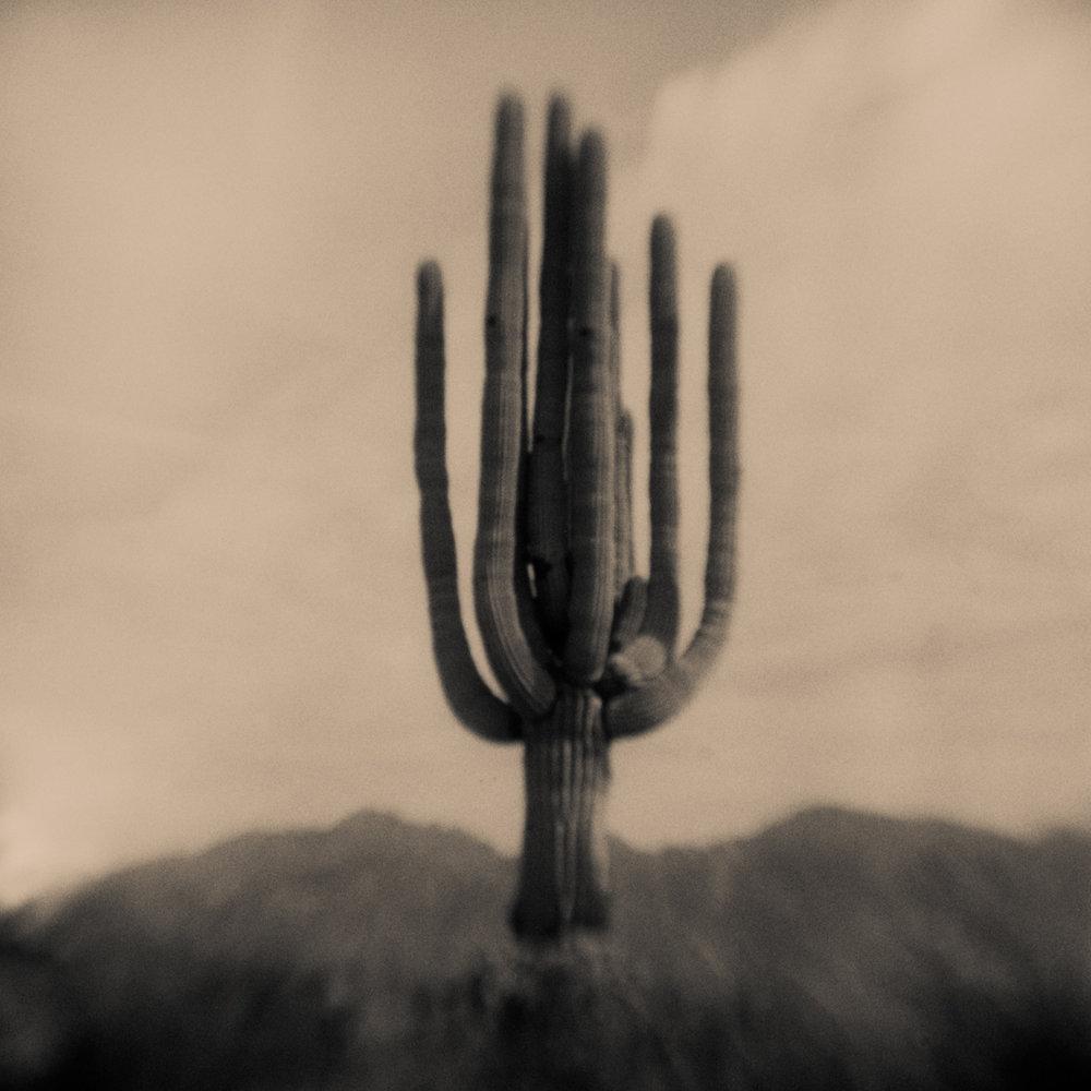 Cactus, Pinhole Photography, David McCleery