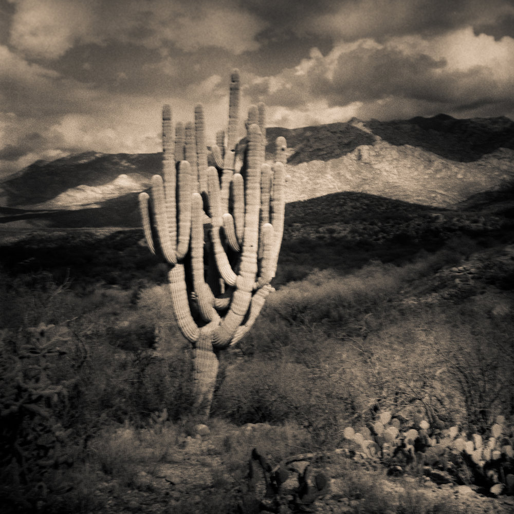 King Cactus, Catalina State Park, Arizona