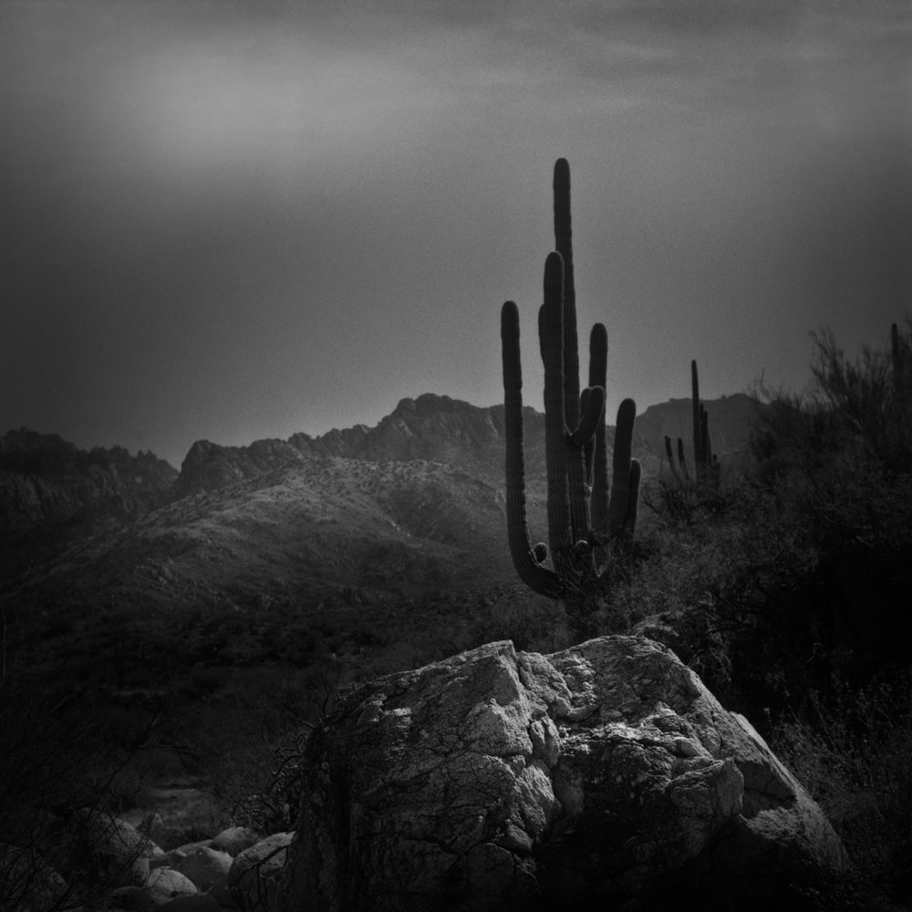 Cactus & Rock, Catalina State Park, Arizona