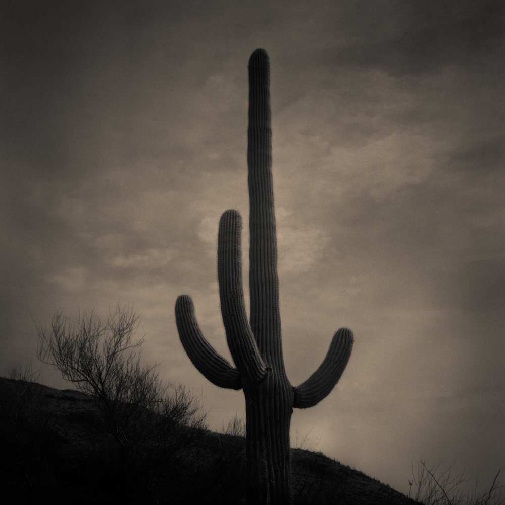 Catus Morning Web (1 of 1).JPG
