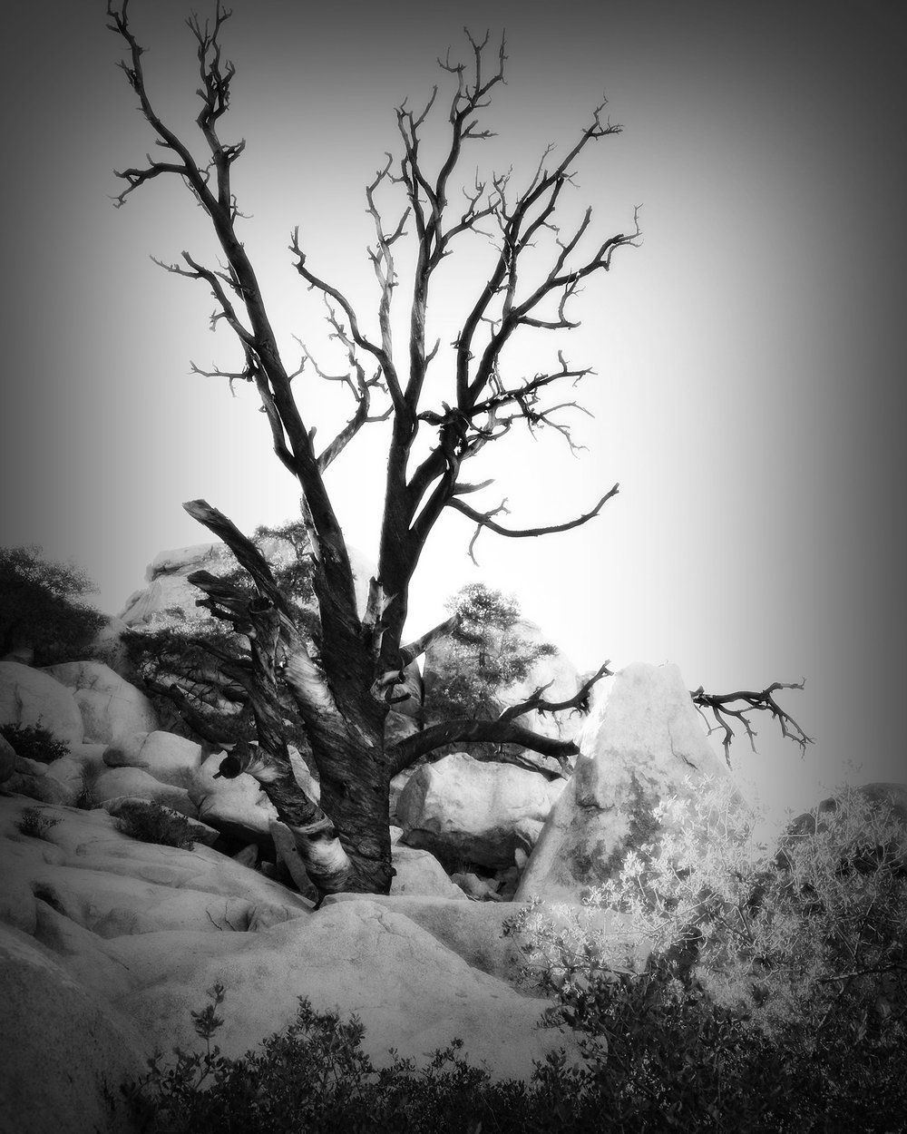 Black Tree on the Rocks