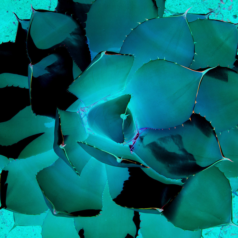 Blue agave 20x20 FINAL WEBSITE.jpg