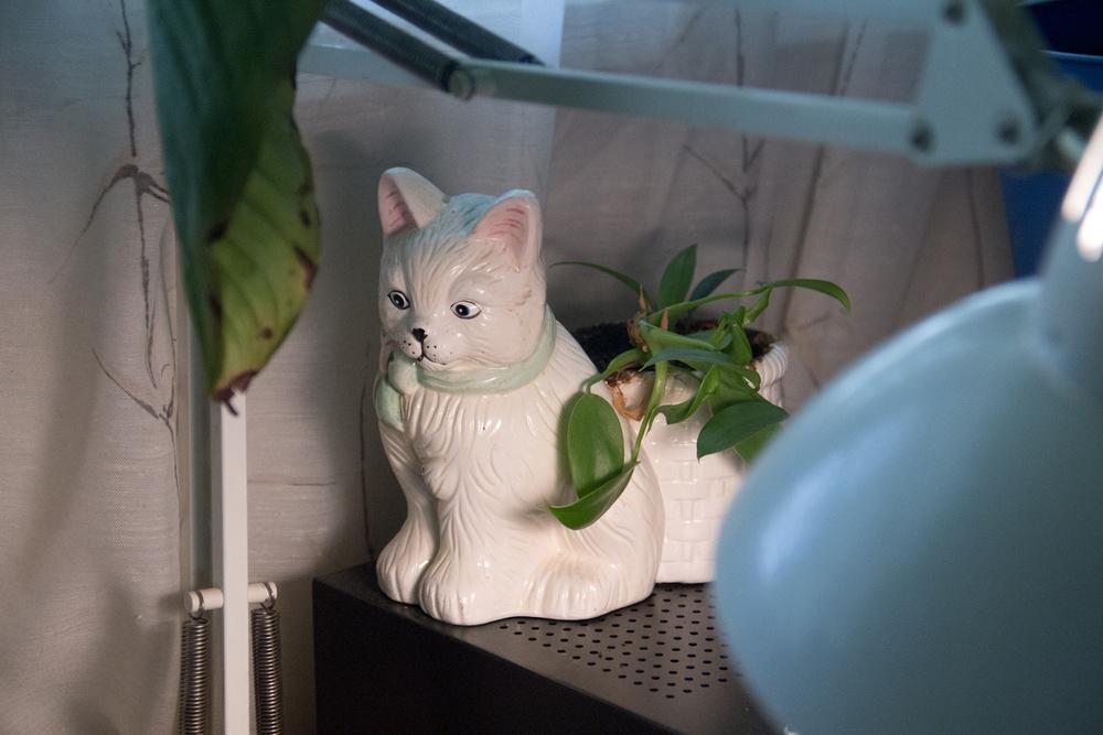 Kitty Plant (2014)
