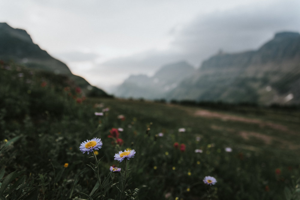 GlacierBlog134.jpg