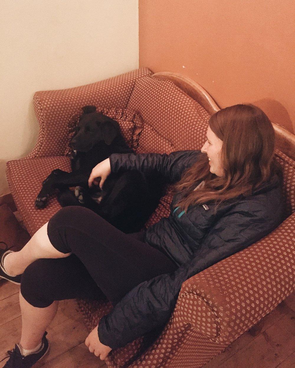Meet Biscuit, the very sleepy, and very wonderful hostel dog.