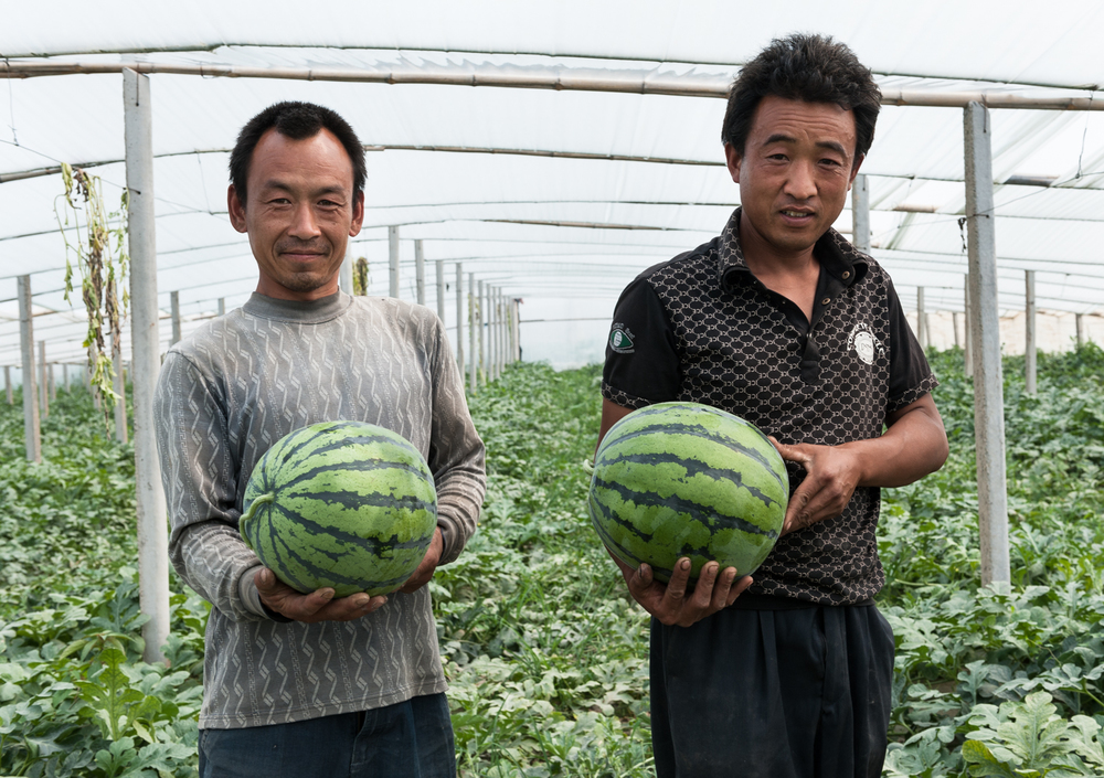 Watermelon Farmers China Mosaic