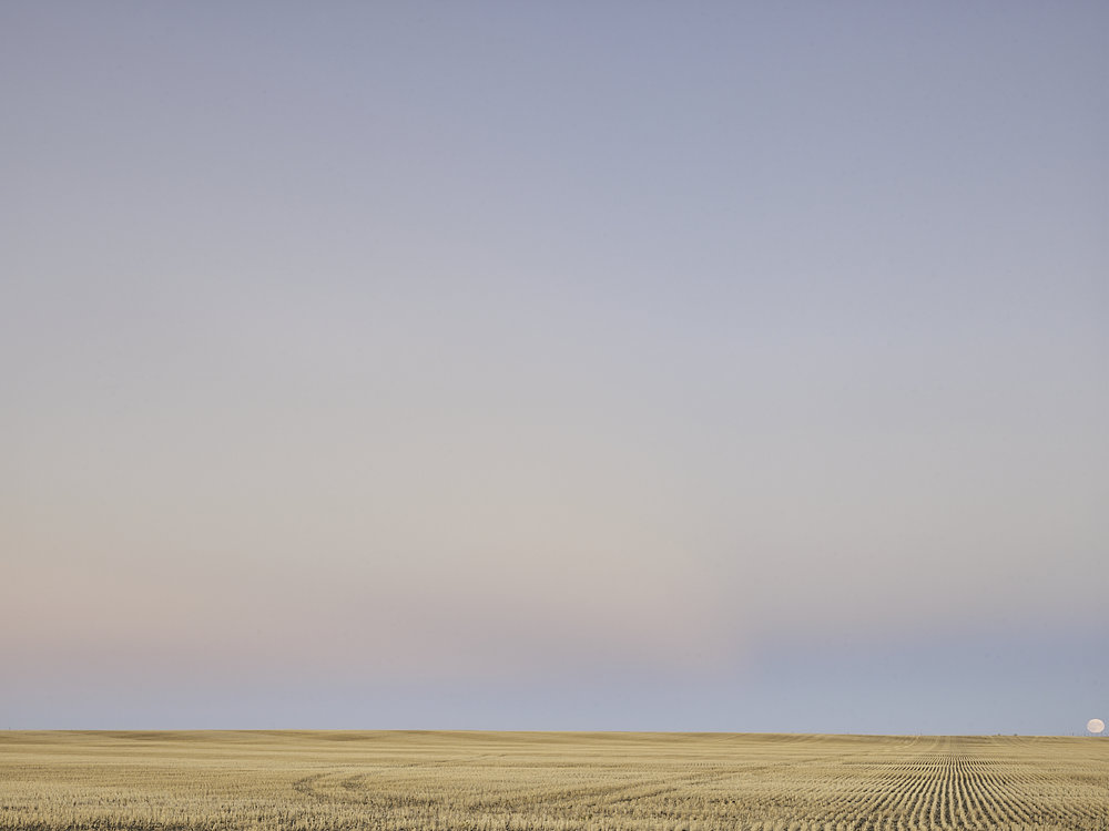 cleared 04,  South of Rouleau, Saskatchewan, Canada, 2017