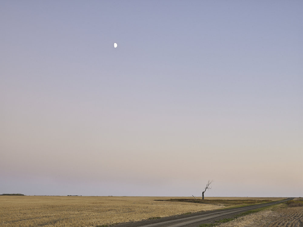 cleared 18,  South of Yellow Grass, Saskatchewan, Canada, 2017