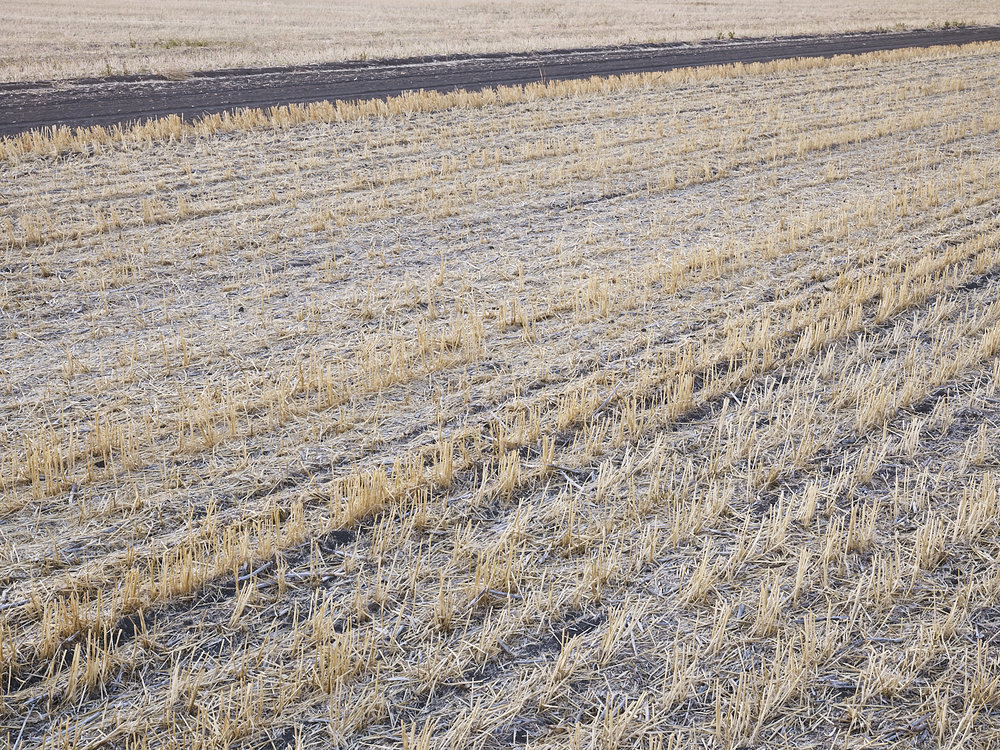 Traces 04, South west of Regina, Saskatchewan, Canada, 2017