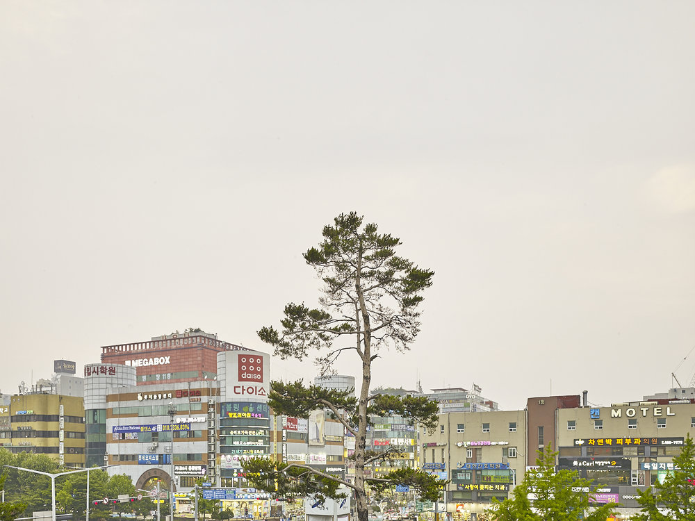 Tree, Ansan, South Korea, 2016