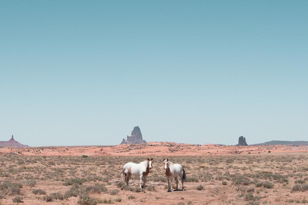 Kayenta+horses+for+website+(1+of+1).jpg
