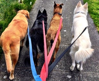 walking with 4 dogs.jpg
