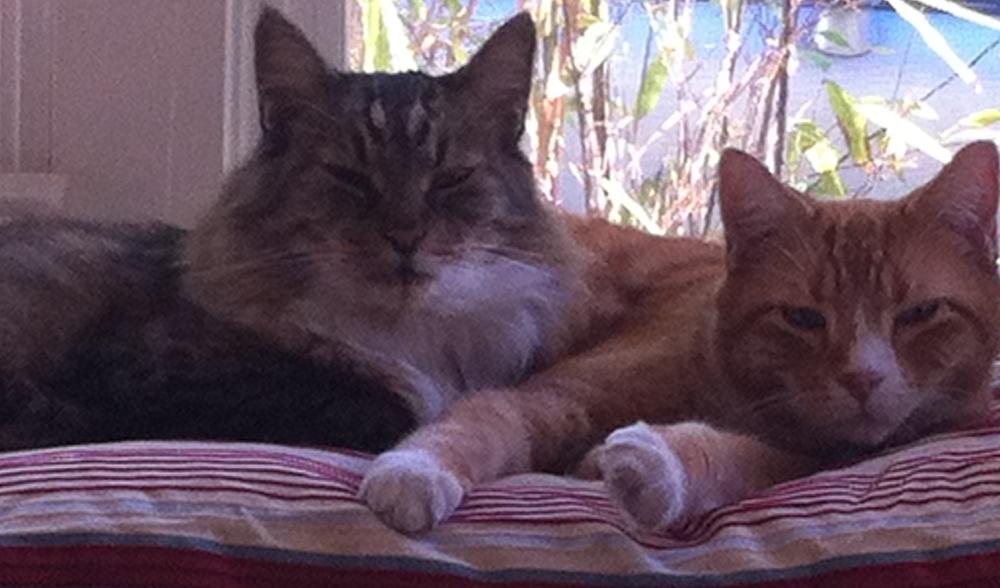 Cats 021.JPG