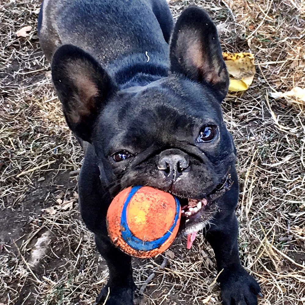 Sophie with ball.JPG