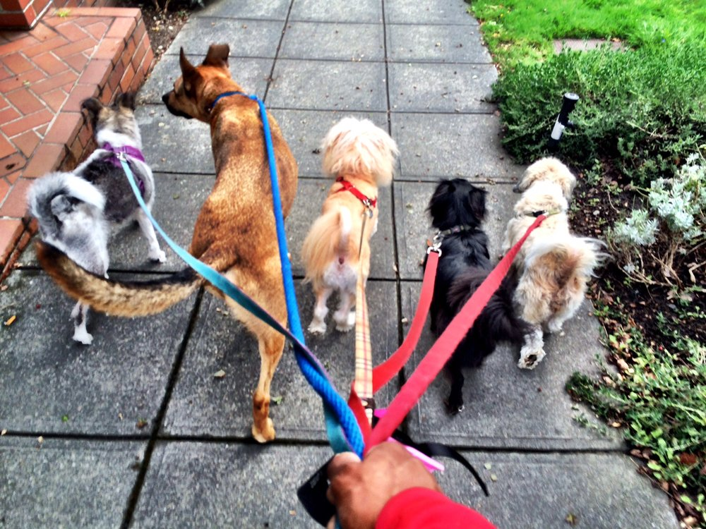 small pack walk.jpeg