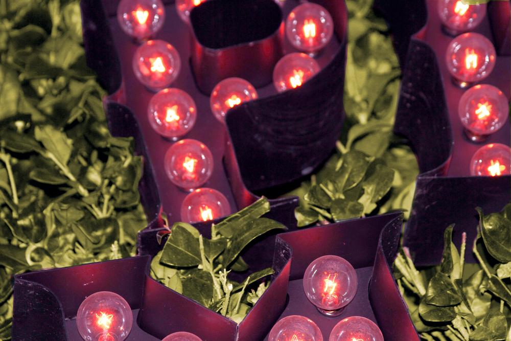 Light Bulbs 1.jpg