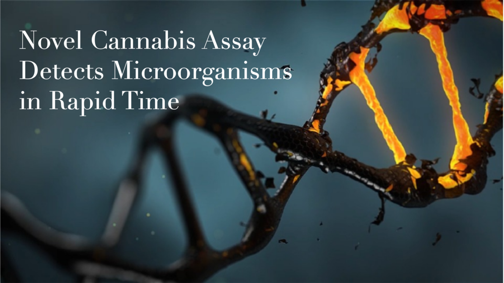 novel-cannabis-assay-detects-microorganisms-in-rapid-time-311332.png