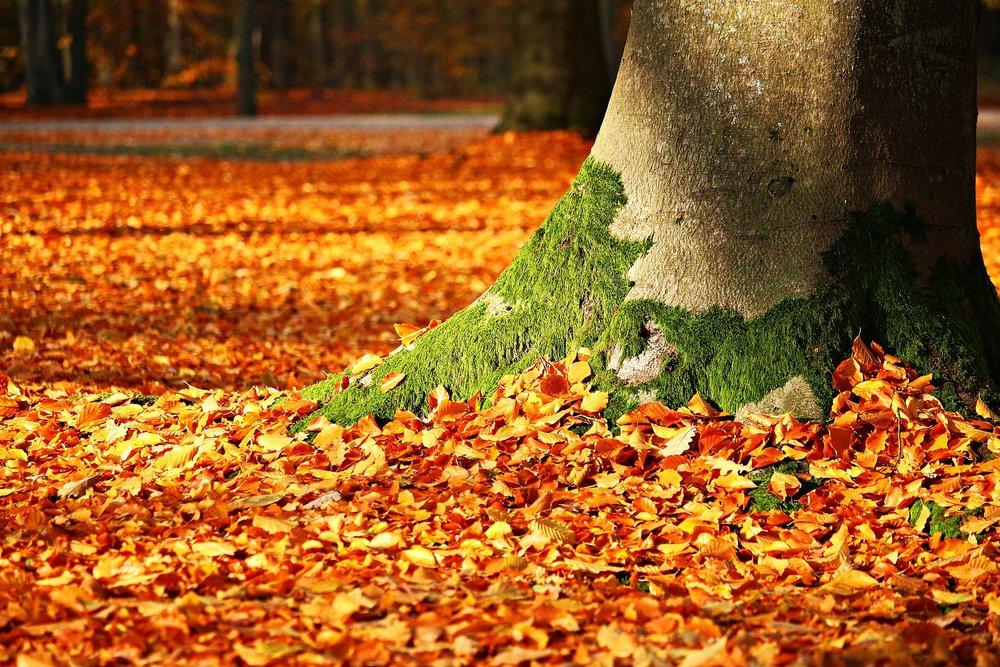 autumn retreat philadelphia