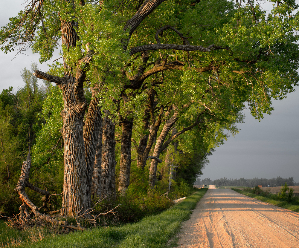 """A grove of old cottonwoods still stands in the same place my dad took my sister and me to 45 years ago. And we discovered fresh asparagus growing there, just like it has every year since our first visit. Knowing where to look is often a well-kept secret, like hunting for other wild foods, since it's disappointing to arrive at a favorite patch and find it's already been harvested    ."""