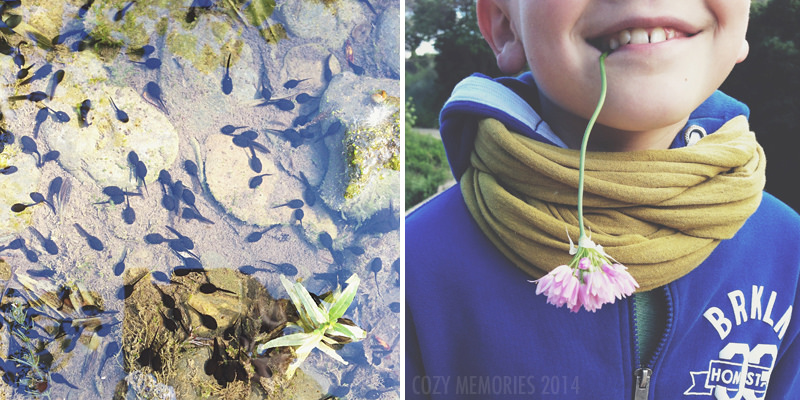 Tadpoles by the dozen / My youngest son munching on wild pink garlic (Alium roseum)