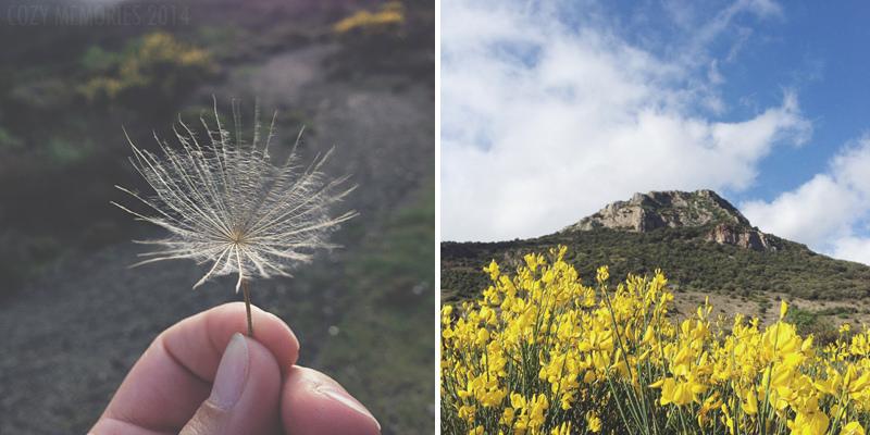Wild salsify seed / Pic de Vissou itself