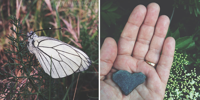 A gorgeous specimen of Aporia crataegi (black-veined white) on fennel / Heart shaped stone that my youngest found & gave to me :)