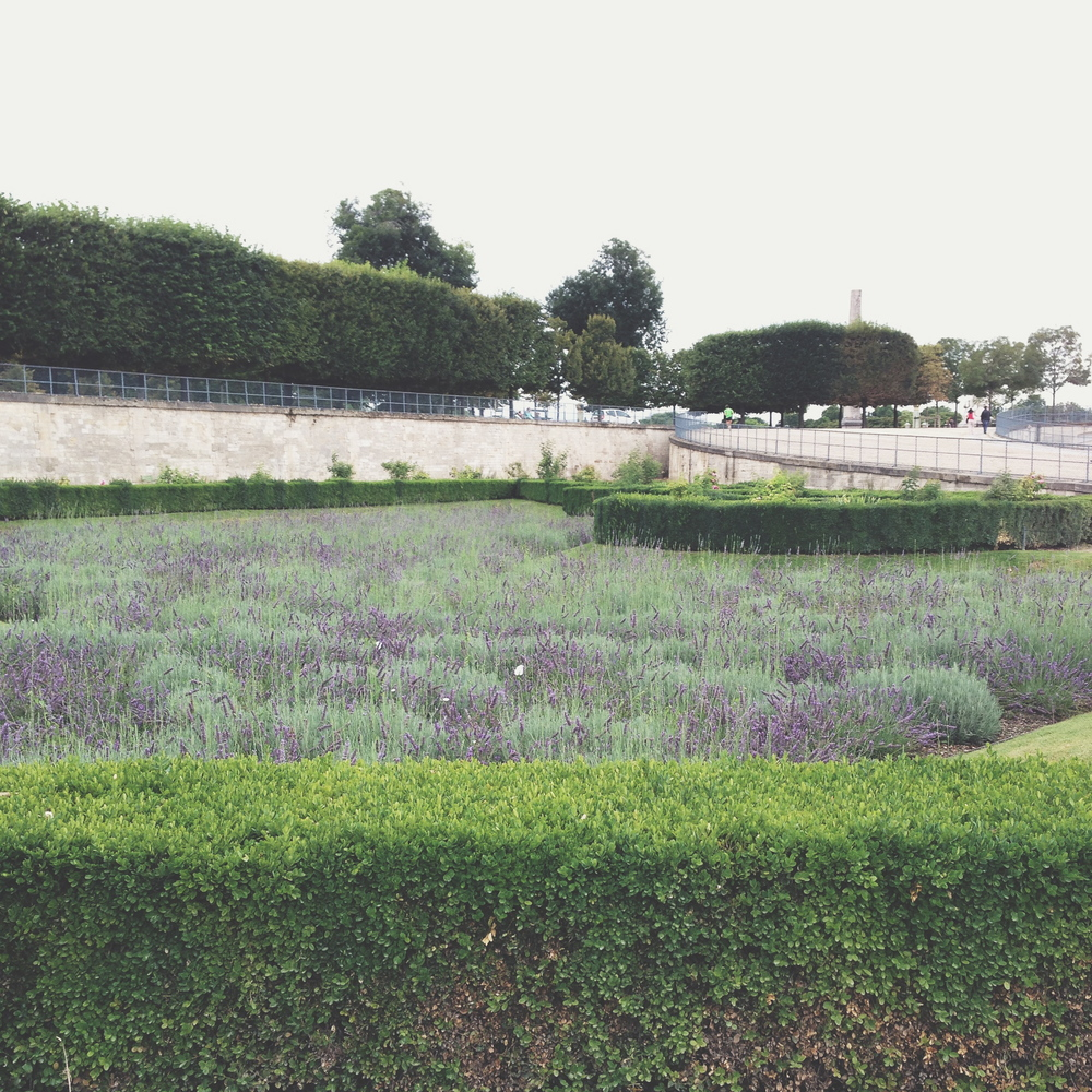Lavender in the Jardin des Tuileries