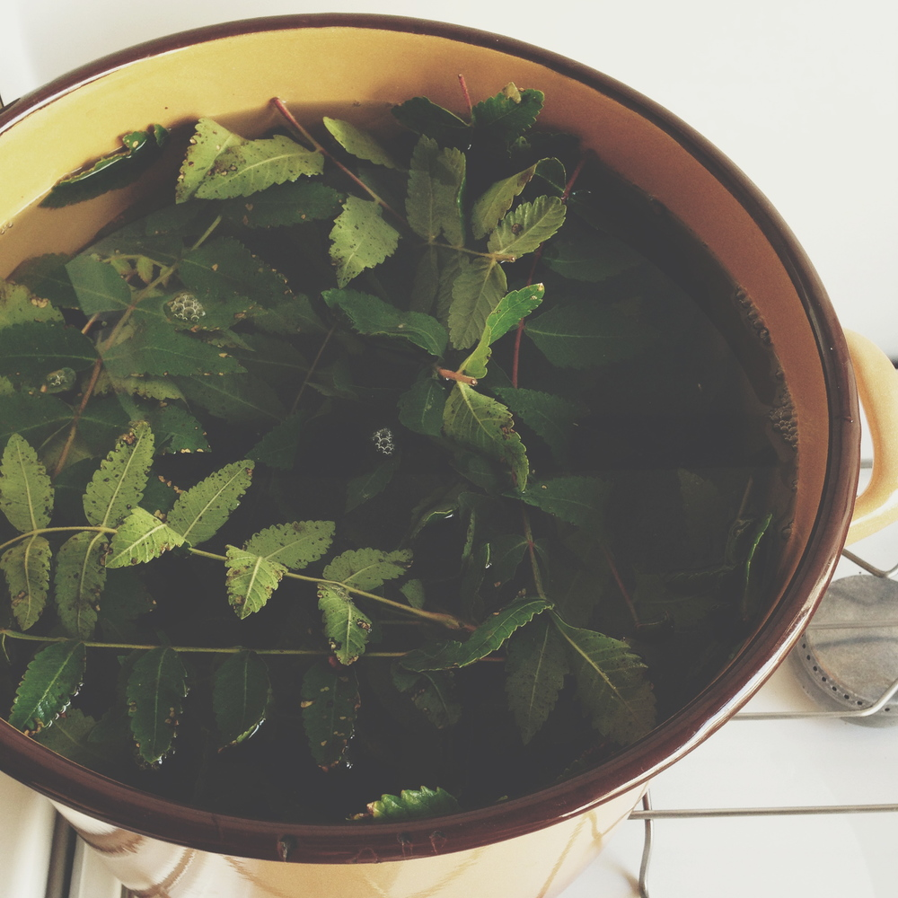 Rhus coriaria leaves in the dye pot