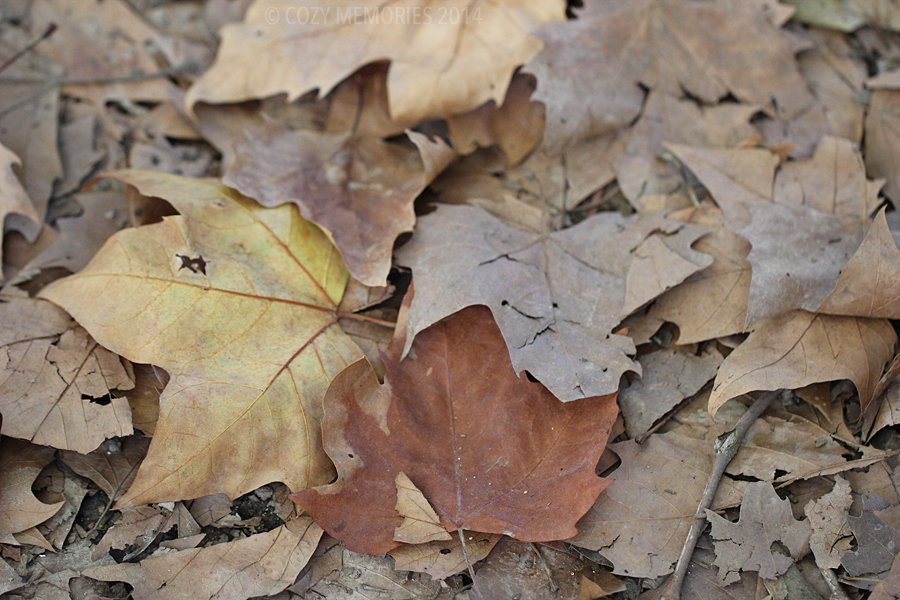 the usual faded colors of autumn we get here ... (London plane leaves)