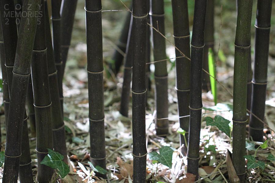 gorgeous black bamboos