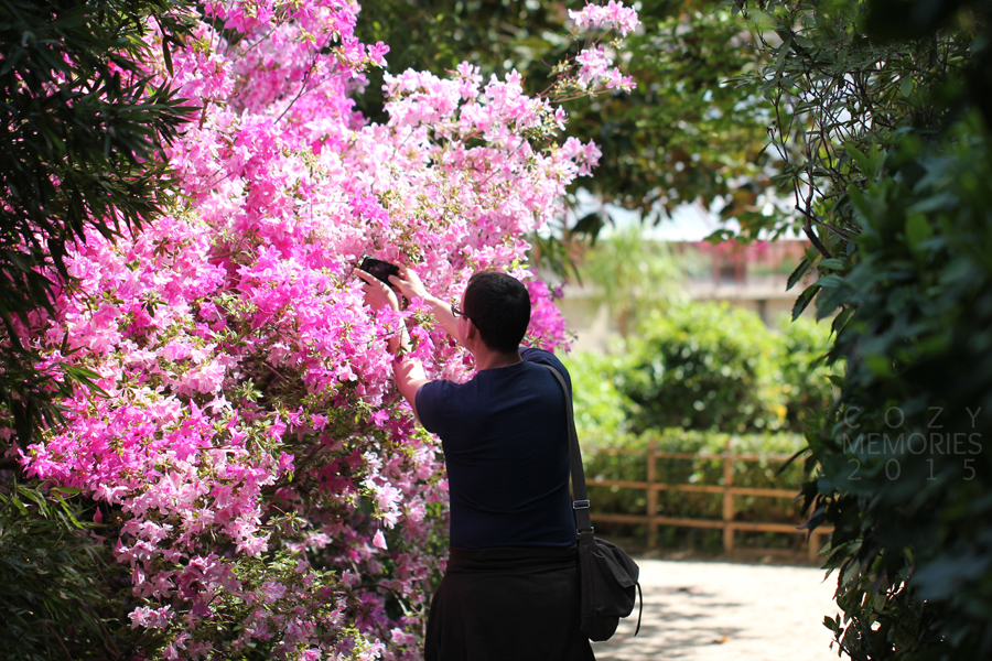 I couldn't resist taking a photo of hubby taking a photo of this huge pink shrub of rhododendrons !