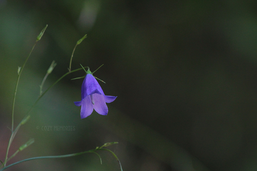 flowers3.jpg