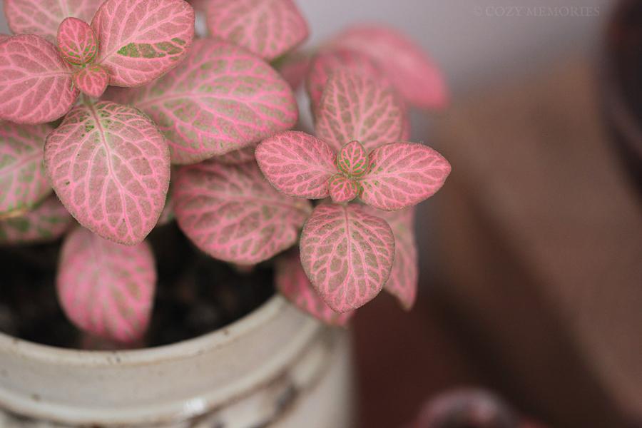 pinkleaves.jpg