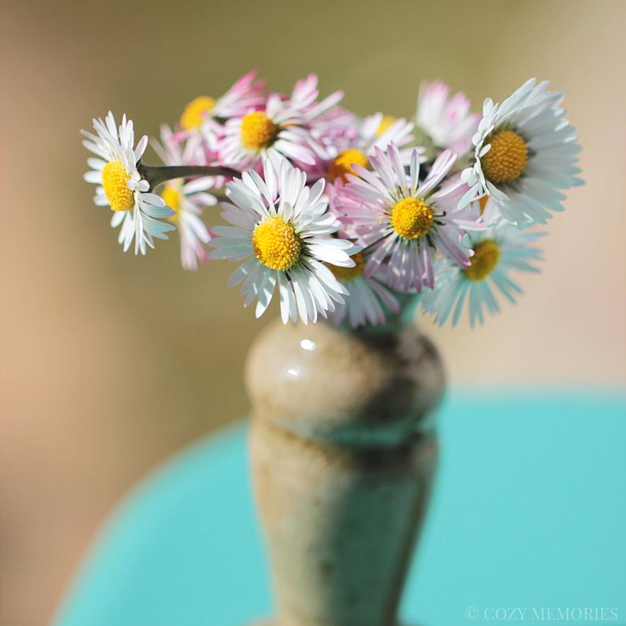 19blog-daisy2.jpg