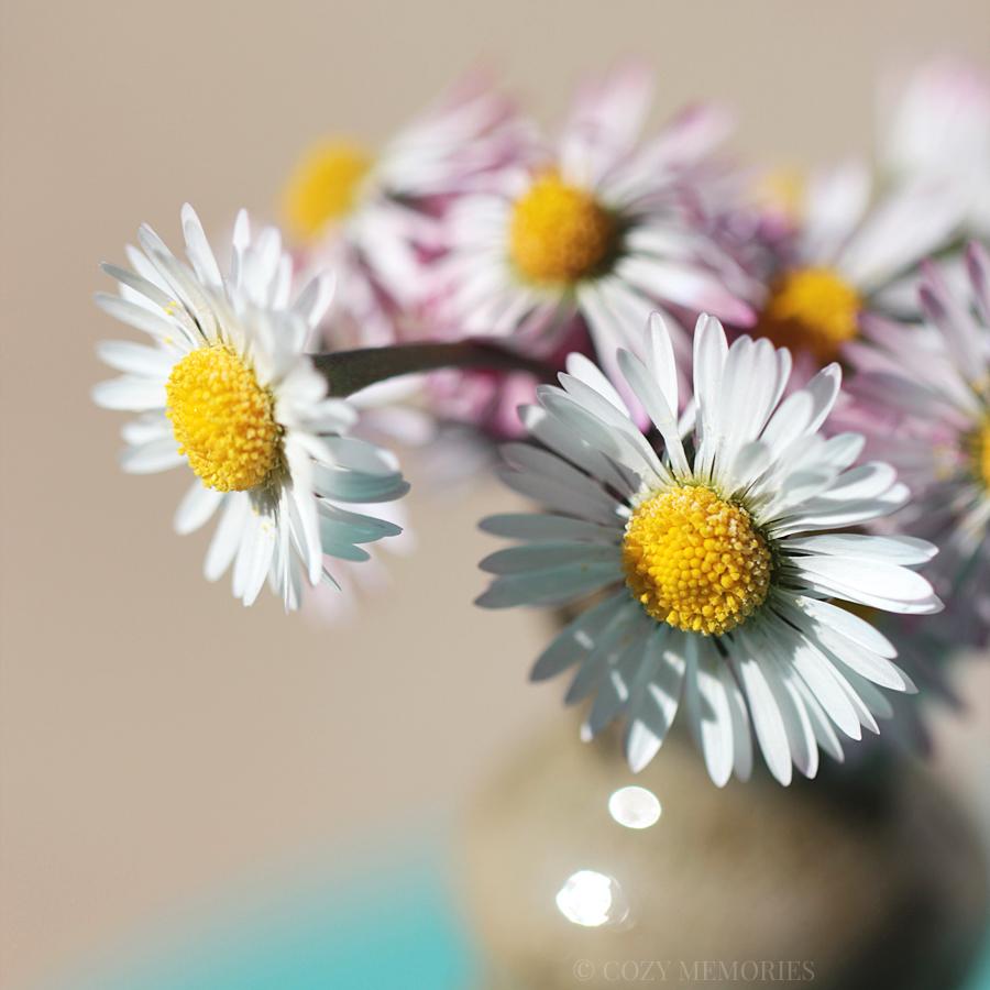 19blog-daisy.jpg