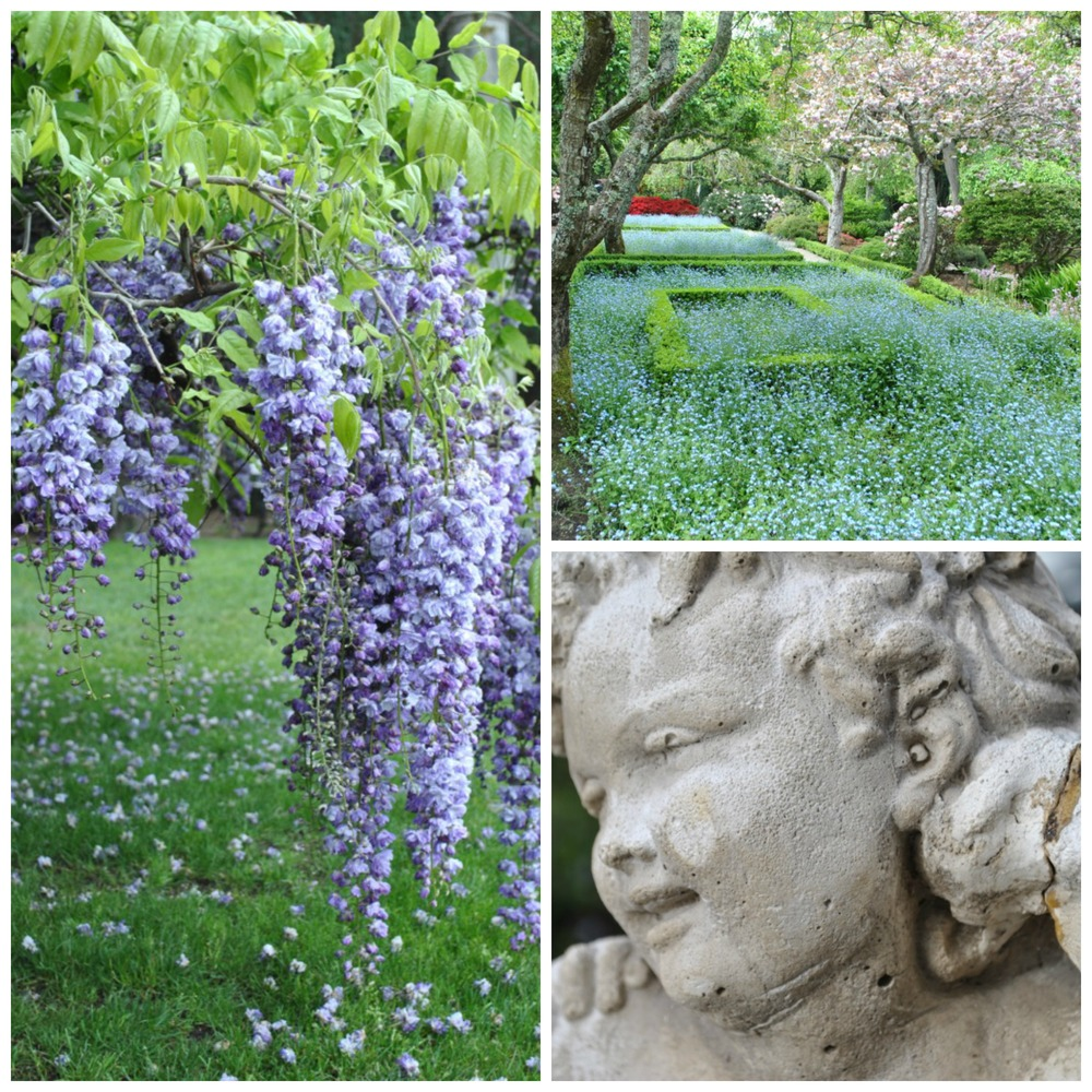Filoli,Wisteria,Angel Collage.jpg