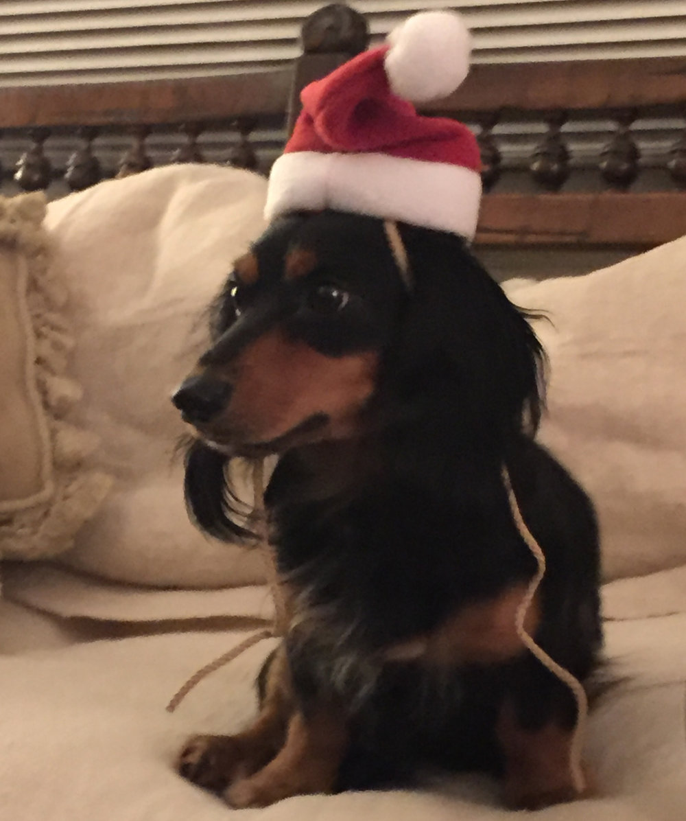 My shining star is my Grand dog Milton. You will see a lot more of him in the coming year!
